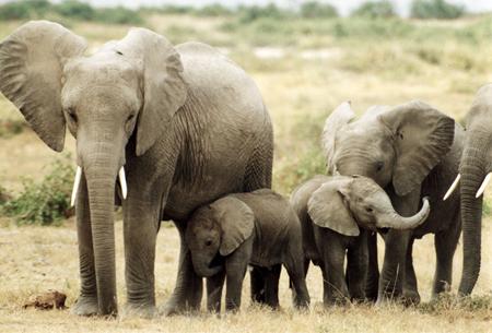 elephants-prjects